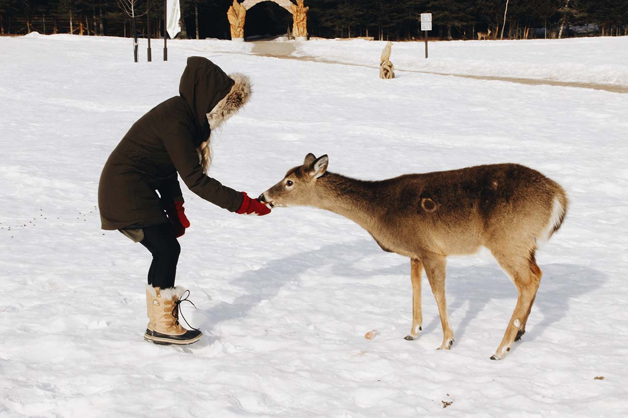 Feeding the deer at Parc Omega, Montreal