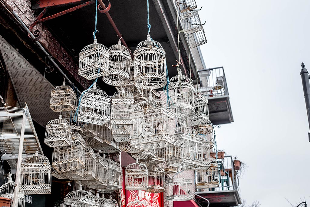 Hanging birdcages at Dragon Flowers