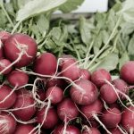 Radishes from local farmers