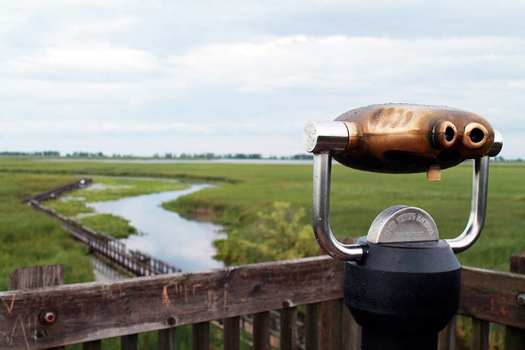 Overlook the marsh at Point Pelee National Park