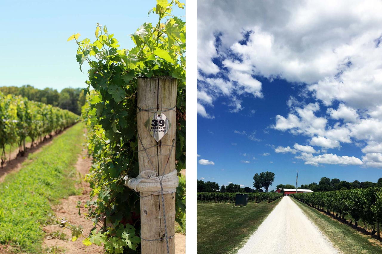 Wineries in Essex County