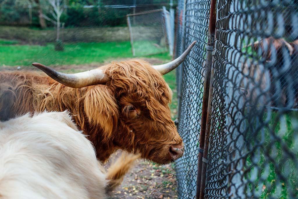 Animals at High Park Zoo