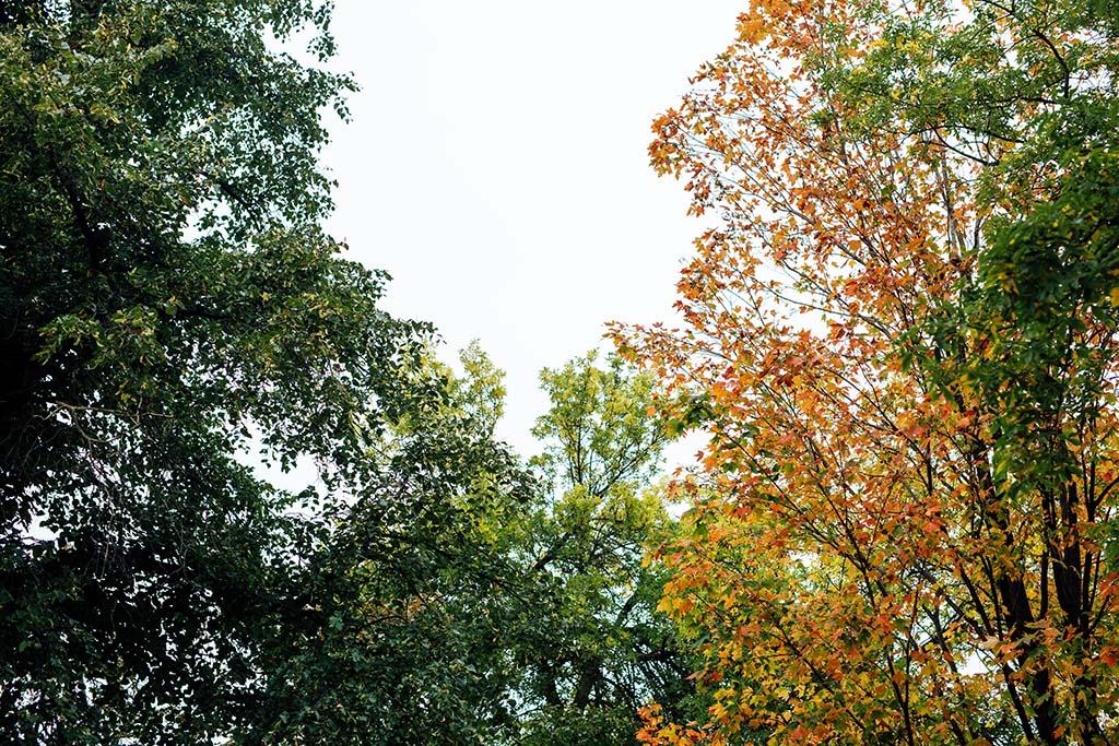 Autumn in Trinity Bellwoods