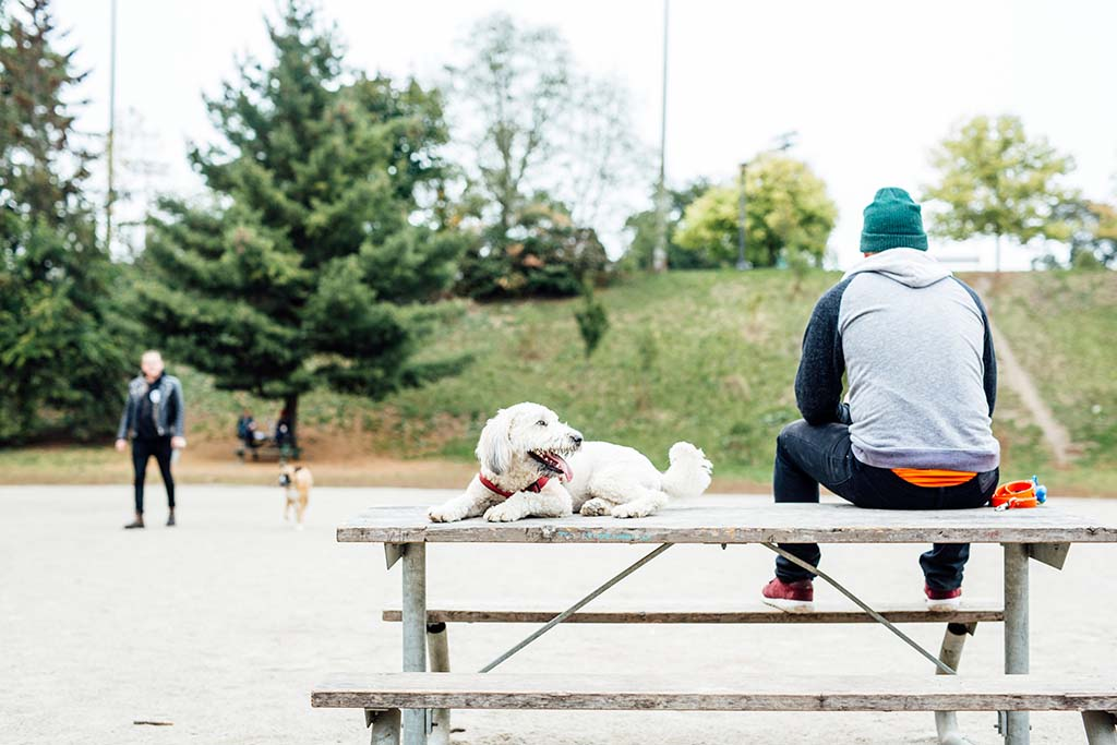 Dog Park in Trinity Bellwoods