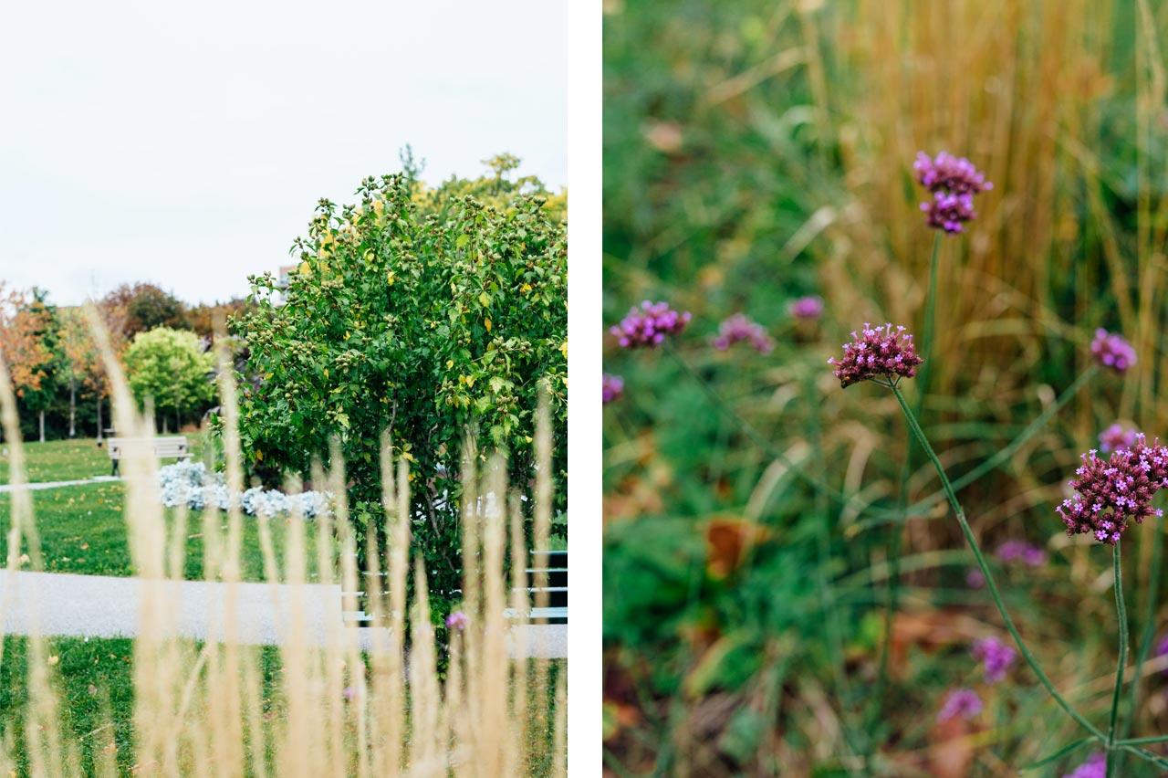 Garden at Christie