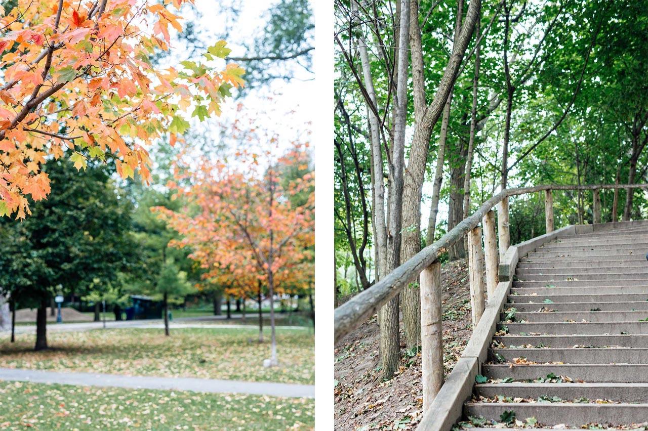 Fall foliage of Trinity Bellwoods