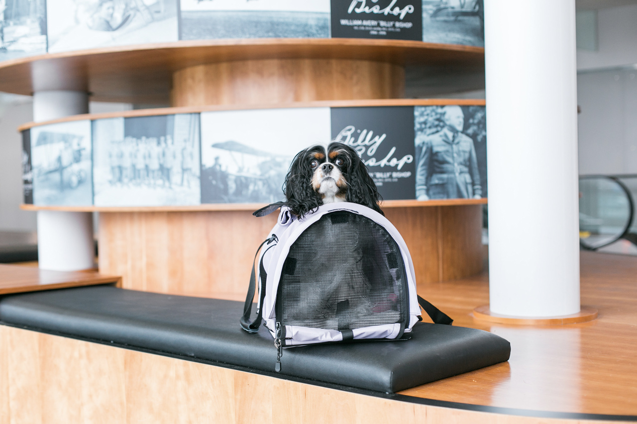 find the right travel carrier for your pet