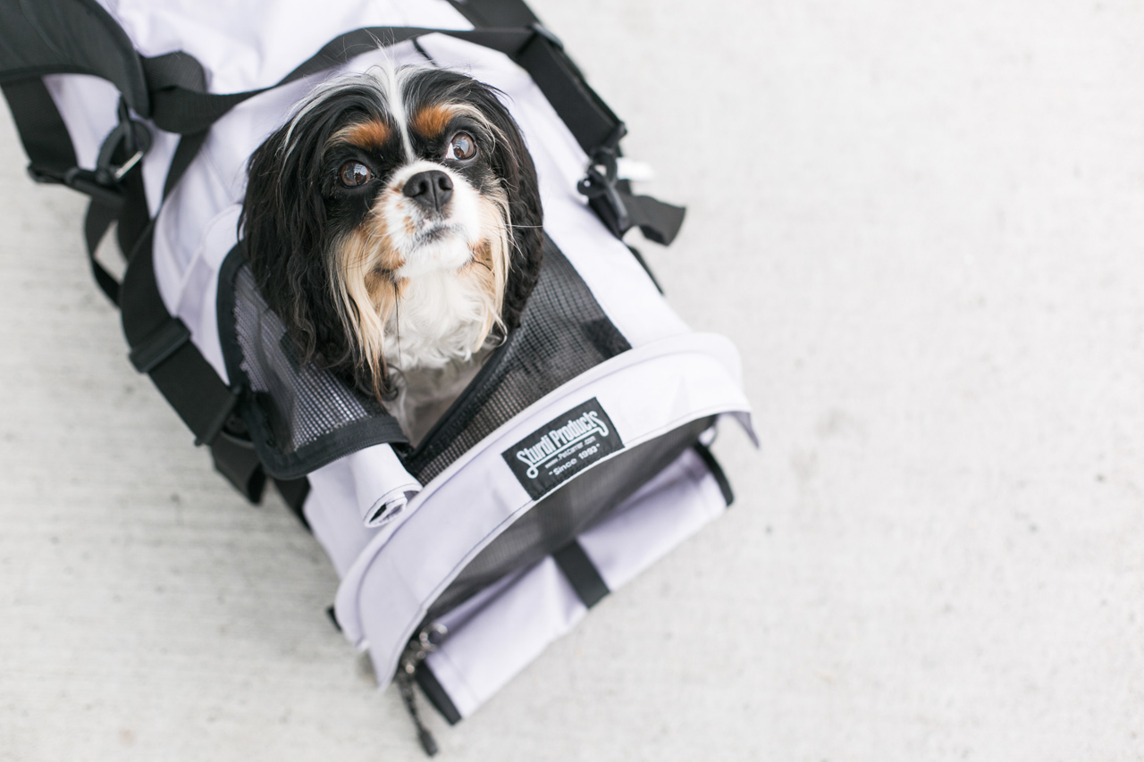 familiarize your pet with the carrier