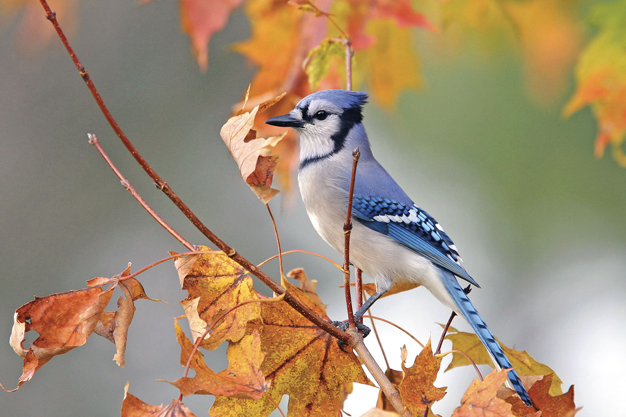 Fall Migration