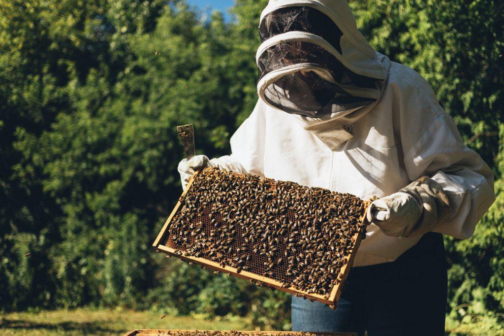 Beekeeping in Ottawa